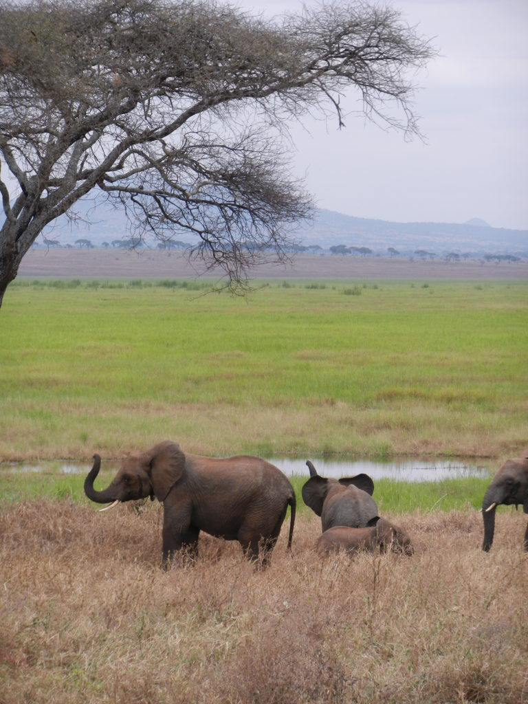 Elephants_&_Plains